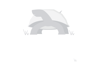 Wood Turtle Strides